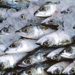 Pesce Surgelato Controverso